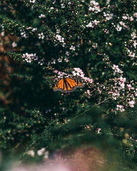 Beautiful orange butterfly sitting on daphnes growing in the middle of a forest