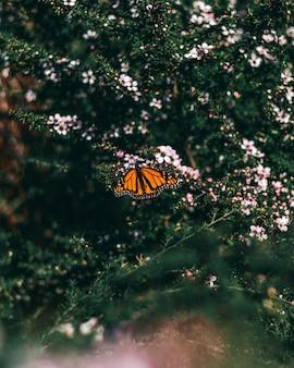 Красивая оранжевая бабочка сидит на дафнах, растущих в середине леса