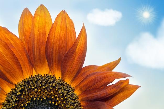 아름 다운 오렌지 장식 해바라기 꽃잎 근접 촬영