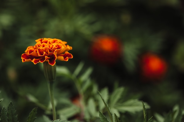 A beautiful orange flower is one in the middle of a dense green grass.
