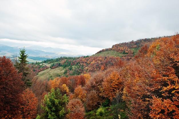 美しいオレンジ、緑、赤の秋の森。秋の森、ウクライナ、ヨーロッパのカルパティア山脈のオレンジ色の丘の多くの木。