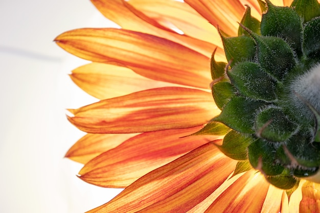 A beautiful orange-petaled flower on white