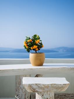 ギリシャの島の白い石造りのバルコニーの鍋に美しいオレンジ色の植物
