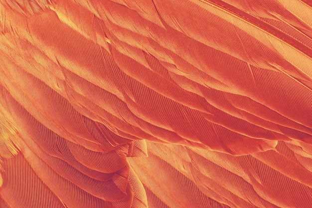 Beautiful orange-red colors tone feather texture background, trends color
