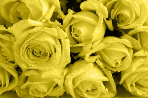 Красивые оранжевые розы над легким бетоном