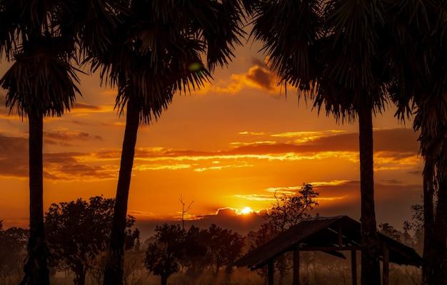 雲の後ろの美しいオレンジ色の日の出。朝の砂糖椰子の木の近くの森のシルエットの古い小屋。黄金の日の出の空。カントリービュー。日の出は赤とオレンジの空で輝きます。自然の美しさ。