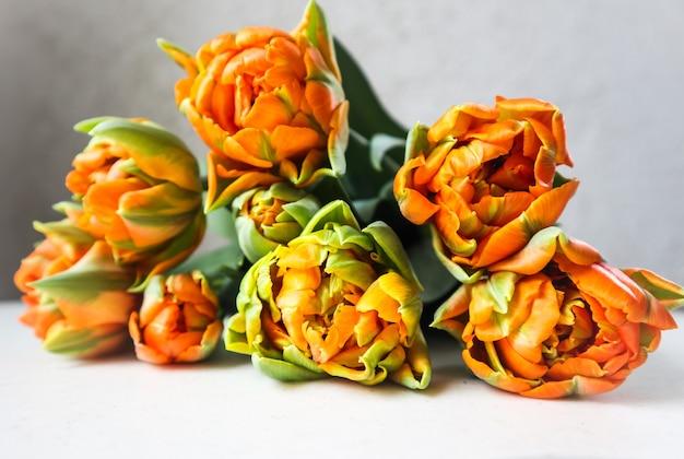 Красивые оранжевые тюльпаны на белом фоне идеально подходят для фоновой поздравительной открытки