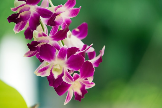 Красивый цветок орхидеи крупным планом