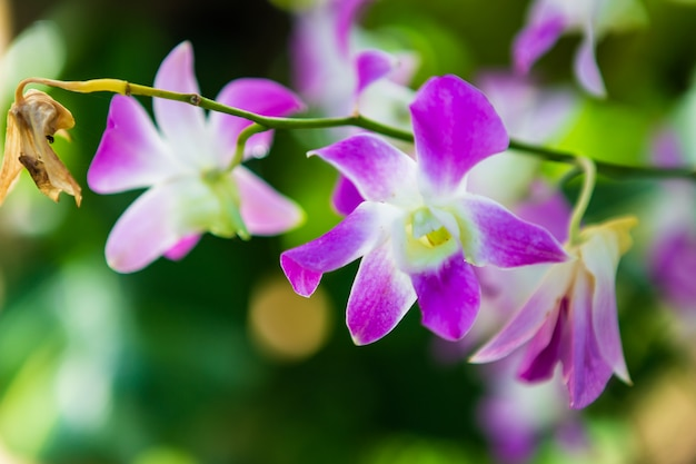 Beautiful orchid flower in garden at morning sun with natural background.