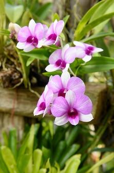Beautiful orchid flower in garden outdoor