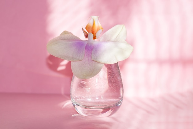 Beautiful orchid flower in glass on pink background with shadows.