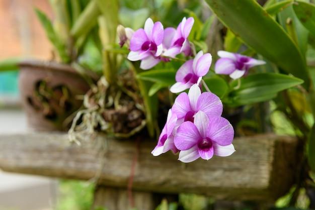 Beautiful orchid in garden outdoor