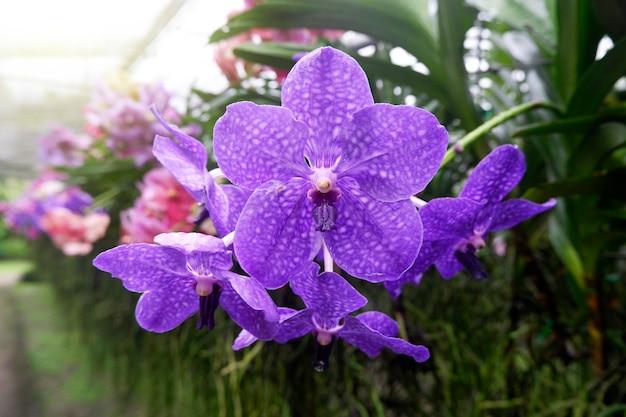 Beautiful orchid in garden.