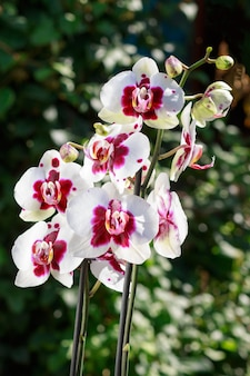 Beautiful orchids of different colors