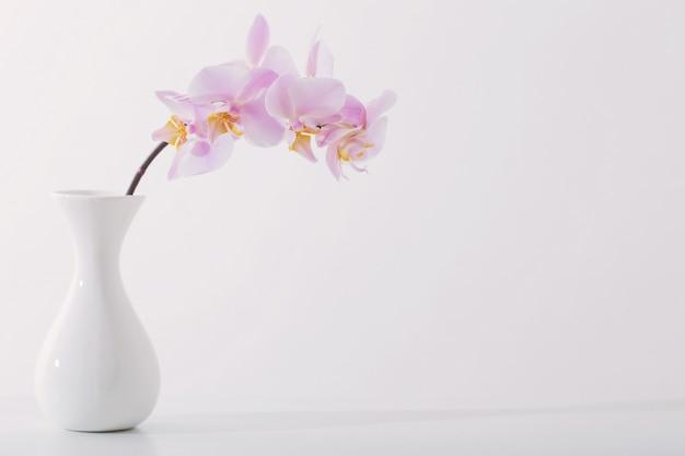 흰색 테이블에 흰색 꽃병에 아름 다운 난초