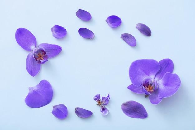 青色の背景に美しい蘭の花