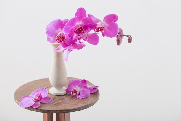 Beautiful orchids in vase on old vase