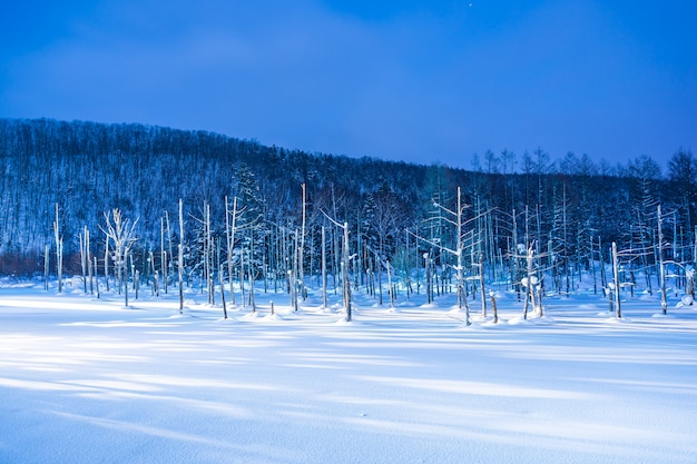 Beautiful outdoor landscape with blue pond river at night with light up in snow winter season