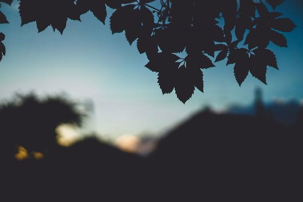 Beautiful outdoor landscape