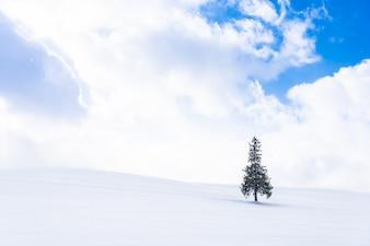 Красивый открытый природный ландшафт с одним ели в снегу зимой погода сезон