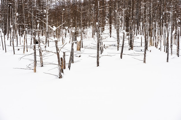 Beautiful outdoor nature landscape with blue pond tree branch in snow winter season