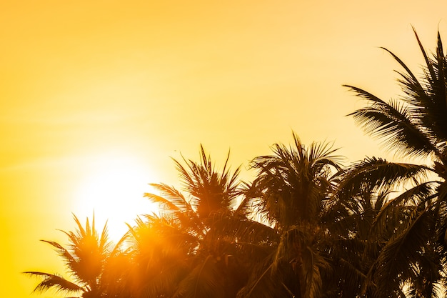 Beautiful outdoor nature with sky and sunset or sunrise around coconut palm tree