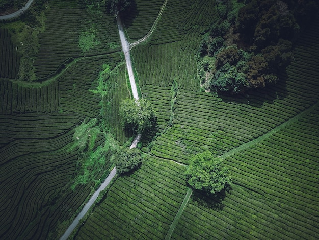 A beautiful overhead aerial shot of a green agricultural field