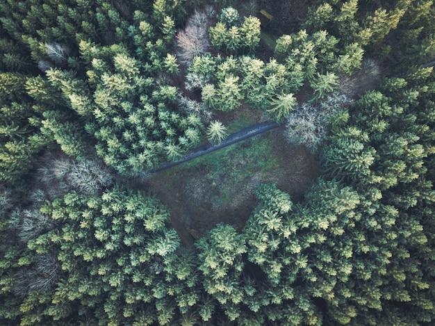 두꺼운 숲의 아름 다운 오버 헤드 항공 샷
