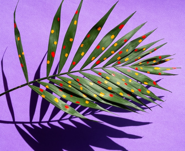 Beautiful painted fern leaves concept with shadows