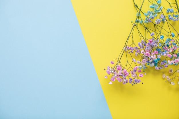 Красивые окрашенные гипсофилы на разноцветных бумажных фонах с копией пространства. весна, лето, цветы, цветовая концепция, женский день.