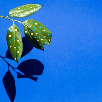 Beautiful painted leaves concept with shadows and copy space
