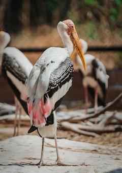 지역 동물원에서 아름다운 페인트 황새