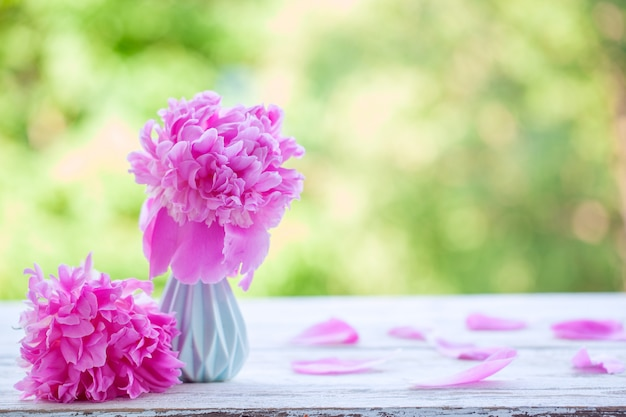 Beautiful pale pink peonies bouquet in white vase over nature green background.