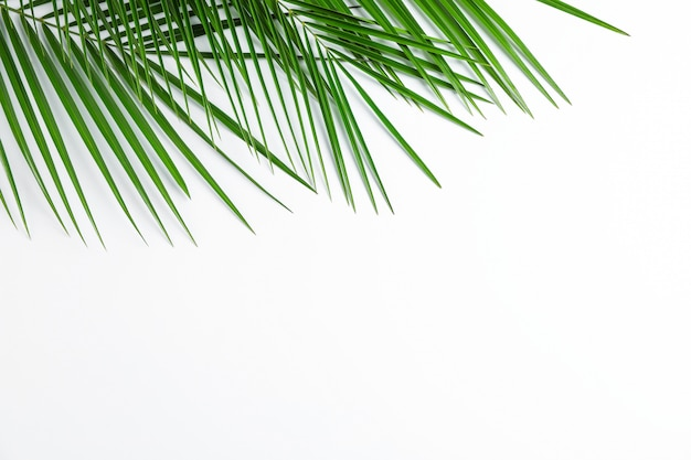 Beautiful palm leaves on white background, top view and space for text. exotic plant