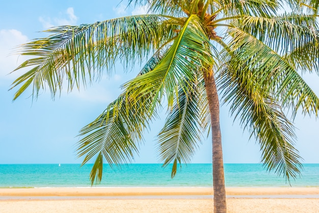 Beautiful palm tree on the beach