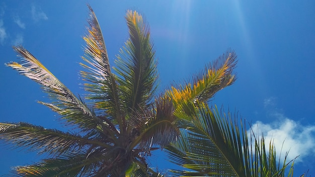 Beautiful palm trees against the blue sky