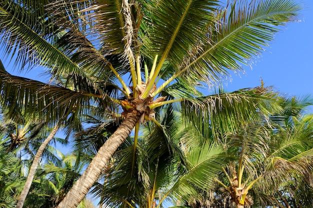 Красивые пальмы на пляже океана