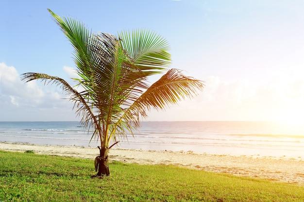 Красивые пальмы на пляже индийского океана