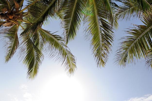Beautiful palm trees at beach ocean