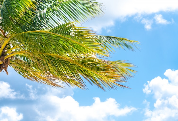 Beautiful palm trees in blue sky background