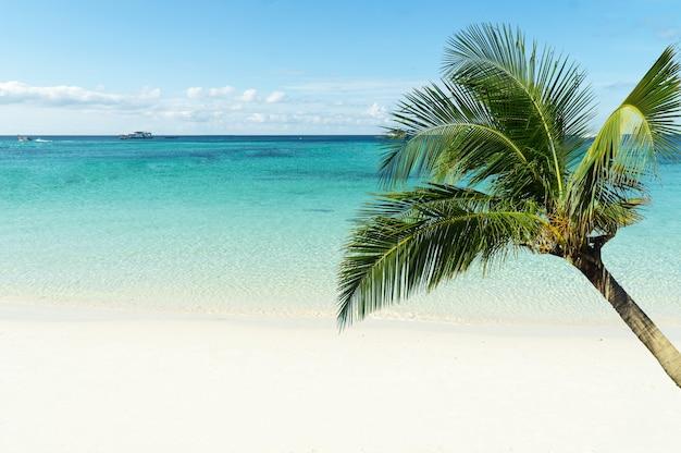 Красивые пальмы на пляже паттайи, облачно на острове ко липе, западное андаманское море