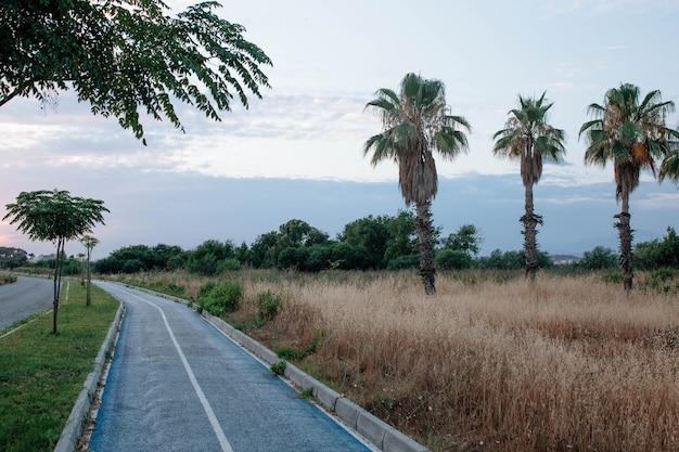 자전거 도로 개념 관광지를 따라 있는 터키의 아름다운 야자수