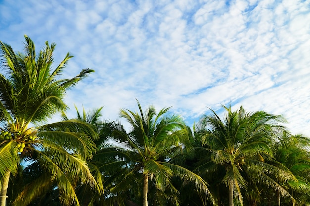 Beautiful palm trees in pattaya beach, cloudy in koh lipe, west andaman sea