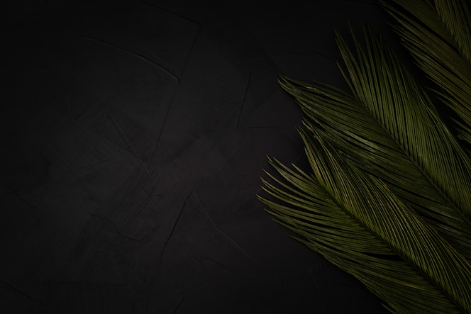 Beautiful palms on black with copyspace