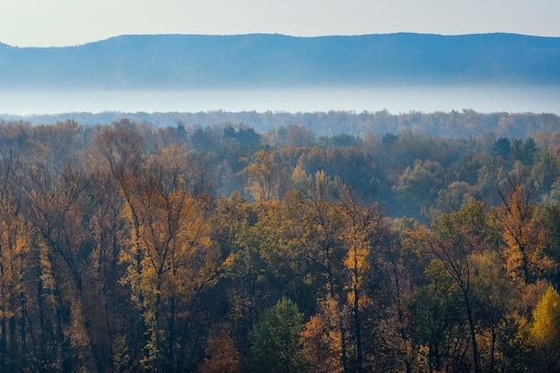 山の丘にある秋の森の美しいパノラマ。山の斜面の間の谷の朝の霧。