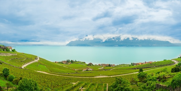 Beautiful panorama view of famous  vineyard , lavaux ,chexbres . the unesco world heritage . at lake