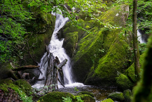 Beautiful panorama view of water fall landscape at green forest in the summer, ghyll force, ambleside, lake district national park, uk