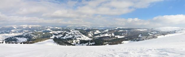 Красивое панорамное фото горного хвойного леса зимой