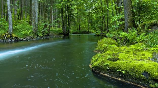 숲에서 키 큰 나무로 둘러싸인 강의 아름다운 파노라마 샷