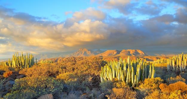 Прекрасный панорамный вид на пустыню на закате в тенерифе, канарские острова